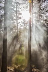 morning fortest (sami kuosmanen) Tags: park morning light sun mist tree pine forest suomi finland spring ray smoke national puu mets kansallispuisto valo usva aurinko kouvola sde kevt repovesi olhava mnty aamu savu