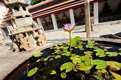 Lotus flower and Buddha statues in Wat Pho - Bangkok - Thailand (PascalBo) Tags: flower fleur statue thailand nikon asia southeastasia waterlily bangkok buddha capital religion buddhism thalande asie capitale nnuphar watpho boudha bouddhisme d300 asiedusudest pascalboegli