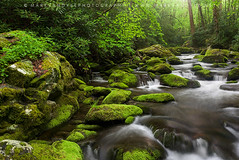 Great Smoky Mountains Roaring Fork Spring Green (Mark VanDyke Photography) Tags: sunlight green water landscape outside outdoors photography early moss spring stream tn tennessee seasonal gatlinburg lush mossy roaringfork greatsmokymountains seviercounty greatsmokymountainsnationalpark gsmnp roaringforkmotornaturetrail