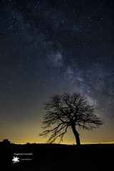 Capolat (EugenioJB) Tags: naturaleza contraluz arbol noche luna amanecer cielo panoramica nocturna ganado cielos montaa nocturnas anochecer nuves largaexposicion vialactea capolat