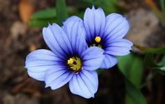 Flower (Hugo von Schreck) Tags: flower macro blumen makro tamron28300mmf3563divcpzda010 canoneos5dsr hugovonschreck