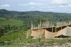 Vista (My photos live here) Tags: africa canon eos tea fort farm plantation portal uganda 1000d