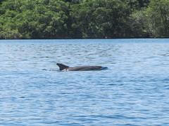 "Bahia de los Dolfines <a style=""margin-left:10px; font-size:0.8em;"" href=""http://www.flickr.com/photos/127723101@N04/27300108746/"" target=""_blank"">@flickr</a>"