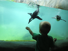 Wonder at the Zoo (Bennilover) Tags: california boy bird water birds children wonder penguins hands child toddlers sandiegozoo exhibits