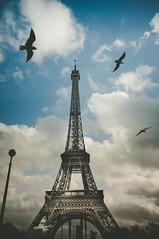 birdies (Pixelicus) Tags: paris bird tower eiffel oiseau mouette
