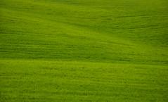Val d'Orcia (ccr_358) Tags: ccr358 2016 spring primavera april aprile day postcard cartolina view scenery landscape panorama italia italy italien italie toscana tuscany provinceofsiena hills valdorcia poggiocovilli knoll green grass waves minimal