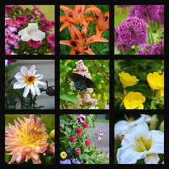 Summertime Flowers (Bubash) Tags: flowers summer nature collage gardens wisconsin butterfly petals backyard lily basket blossoms onion petunia blooms zinnia sundrops perennials annuals 2016 picmonkey