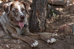 2016/366/202 Ready for Anything (cogdogblog) Tags: dog felix