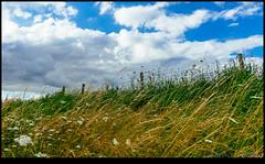 160713-9653-XM1.jpg (hopeless128) Tags: france sky eurotrip 2016 fence clouds nanteuilenvalle aquitainelimousinpoitoucharen aquitainelimousinpoitoucharentes fr