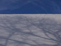 FaMILYTree. (Warmoezenier) Tags: raw tree boom shadow schaduw boerderij farm stamboom familytree historie kloetinge snow sneeuw zeeland dak roof schuur barn winter cool wit white frost vorst dakpan nok