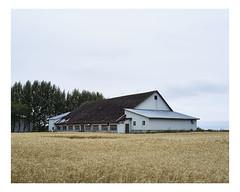 mtabetchouan (Mriol Lehmann) Tags: barn cereals decay farm field landscape rural mtabetchouan qubec canada