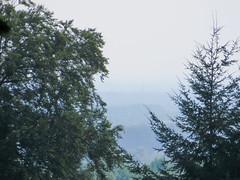 IMG_5250 (jaglazier) Tags: 2016 91416 bielefeld bielefeldzoo coniferoustrees conifers copyright2016jamesaglazier deciduoustrees germany hills september teutoburg teutoburgforest teutoburgerwald trees zoos mountains parks nordrheinwestfalen
