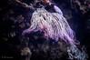 Barriera Corallina 2 - Oceanario Lisbona (antoniosimula) Tags: oceanario lisbon lisbona lisboa portogallo portugal area expo fish flora fauna nikon d3200 35mm 70300 tamaron ocean species pacific atlantic indian