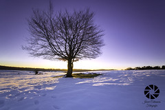 amanecer en la Sierra de Entzia 2 (Javier Colmenero) Tags: dawn amanecer loschicosdelalba nieve tree snow largaexposicin longexposure alava euskadi nikon alavavisin nikond3100 sigma1020 sierradeentzia opacua paisaje landscape inverno winter backlighting contraluz
