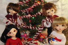 IMG_6654 (EilonwyG) Tags: christmas wolf des bjd cp soom fairyland abjd ante skoll ltf cerberusproject darkelfsoo elfshiwoo littlefee teeniegem