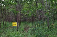 "GWD Forestry - Brazil Images <a style=""margin-left:10px; font-size:0.8em;"" href=""http://www.flickr.com/photos/47172958@N02/16534146654/"" target=""_blank"">@flickr</a>"