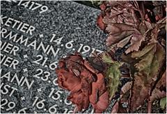 Langemark German WW1 Cemetery (Andy J Newman) Tags: cemetery nikon worldwarone ww1 firstworldwar hdr ypres flanders germancemetery langemarck hdrefexpro