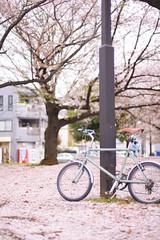 DS7_1785.jpg (d3_plus) Tags: street sky plant flower nature bicycle japan walking 50mm cycling spring nikon scenery bokeh outdoor fine daily bloom  cherryblossom  sakura streetphoto nikkor     dailyphoto   kawasaki  50mmf14 thesedays pottering     fineday    50mmf14d  nikkor50mmf14    afnikkor50mmf14  50mmf14s  d700  kanagawapref  nikond700 aiafnikkor50mmf14  nikonfxshowcase nikonaiafnikkor50mmf14