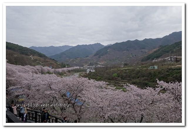 화개십리벚꽃길29