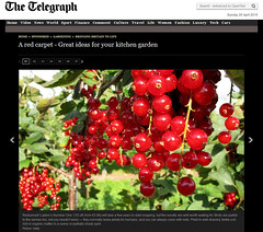 Published - Cultivated red Currants on the Bush (Batikart) Tags: screenshot published ursula sander 2015 batikart