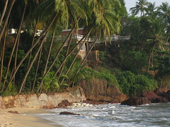 Kannur district, Kerala, India, Asia, North-Kerala, Indien, Asien (oksana8happy) Tags: ocean sea copyright india beach water strand hotel asia asien heiconeumeyer meer wasser kerala palmtrees palmtree ufer palme indien coconutpalm gastronomie gastronomy southindia malabar southasia copyrighted palmen arabiansea ozean coconutpalms kannur kokosnusspalme kokospalme cannanore northkerala coconutpalmtree südindien seashellresort coconutpalmtrees arabischesmeer südasien seashellinn lakshadweepsea nordkerala kannurdistrict seashellbeachresort