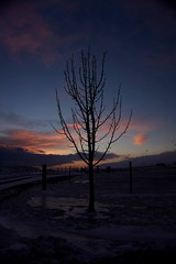Naked tree (The Hibiscus Traveller) Tags: life pink winter sky tree nature naked iceland leafless thehibiscustraveller