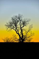 Single Tree Sunset (thefisch1) Tags: sunset tree silhouette interesting nikon midwest calendar single kansas prairie nikkor flinthills oogle