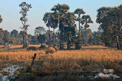 Landscape- Koh Ker