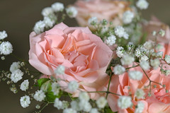 * (najla sohaibani) Tags: pink flowers sun white flower green    goodevening    goodafternoon