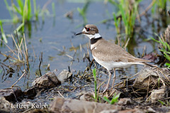 marsh6 (ralphsplitter) Tags: county nature centennial idaho marsh camas