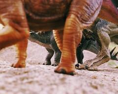 thinning the herd 2 (Chris Blakeley) Tags: seattle toys dinosaur stegosaurus papo allosaurus hipstamatic