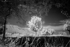 treeshine. (jrseikaly) Tags: bw lebanon white black nature landscape ir jack photography infrared arz bnw cedars ariz seikaly jrseikaly