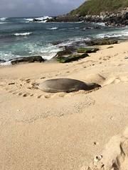 IMG_0279 (Ourisman Travel) Tags: hawaii maui wailea hotelwailea