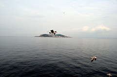 Sea Gulls (Ali Enes M.) Tags: sea horses seagulls turkey island ada nikon trkiye istanbul trkei deniz bykada turecko princesislands constantinapolis stambol konstantiniyye d5100 turcji