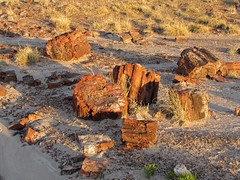Crystal Forest at Petrified Forest NP in Arizona (Jeff Hollett in Vancouver, WA) Tags: arizona centennial nationalpark anniversary 100 nationalparkservice petrifiedforest petrifiedwood 2016 crystalforest