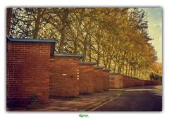 """WELCOME TO IMITATION STREET"" (rgisa) Tags: street tree garage rue arbre dunkerque dunkirk boileau"