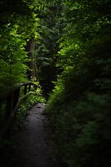 DSC_3177.jpg (JohannesKullmann) Tags: light tree green nature licht nikon hiking path natur tray baum wandern weg d3200