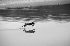 _DSC1258 (adrizufe) Tags: playa beach reflejos reflections walking plentzia basquecountry perro dog nature ilovenature aplusphoto ngc nikonstunninggallery nikon d7000 adrizufe adrianzubia
