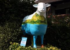 Ewe of the Bay (Cumberland Patriot) Tags: hotel bay sheep outdoor painted go cumbria trust regent ambleside calvert waterhead the ewe cumbrian herdwick of goherdwick