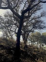 Mood (manu abis) Tags: mood albero sughero sughereto