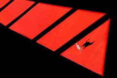 Cani sciolti (meghimeg) Tags: 2016 lavagna cane dog rosso red encarnado rot ombra shadow sole sun redcarpet