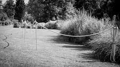 2016-07-19-001-MaMa - Augsburg - BoGa - 0001 - BW00001s - W1920 (mair_matthias_1969) Tags: augsburg bayern deutschland de lumix panasonic dmcg7 dmcg70 mft microfourthirds g7 g70 lumixg7 lumixg70 nophotoshop keineschmutzigentricks ohneschmutzigetricks nodirtytricks gvario14140f3556 outdoor zaun fence botanischergarten