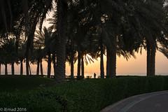 Beautiful scenery...good vibes... (EHA73) Tags: summiluxm11450asph leica leicamp typ240 kuwait salmiya silhouette sunset trees city cityscape kuwaitscientificcenter walk palms