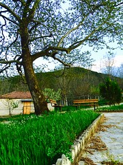 Beautiful square in the village. (KC Vrn) Tags: trees nature grass bench square village greece fields farsala thessaly dilofo ελλαδα χωριο πλατεια διλοφο φαρσαλα