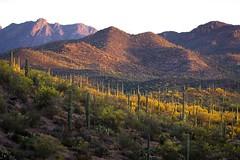 Saguaro National Park Landscape (josullivan.59) Tags: travel sunset shadow wallpaper arizona cactus orange usa green nature landscape evening day clear saguaro saguaronationalpark artisitic nicelight 3exp canon6d tamron150600