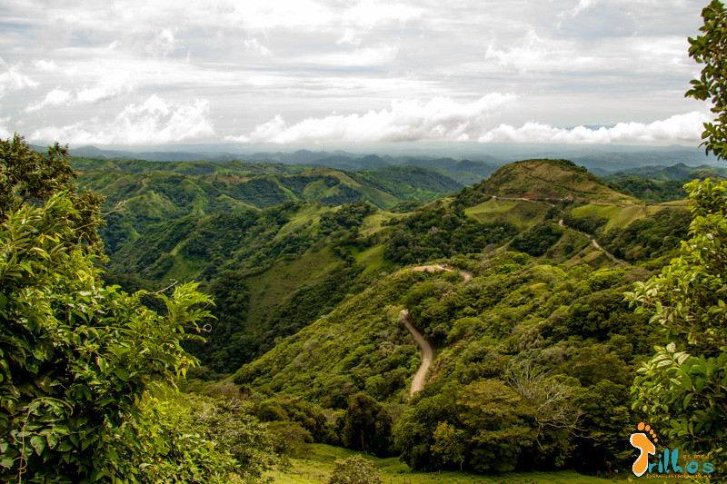 Monteverde. verde Luxuriante na Costa Rica