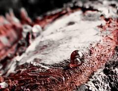 The #Last #Drop of #Life ( Explore #18 28.02.2015 ) (roizroiz) Tags: life plants detail macro last forest interestingness earth drop mothernature ecosystem deforestation destroying ecosistema i500 deforestacin macromondays roizroiz photophotospicpicspicturepicturessnapshotartbeautifulflickrgoodpicofthedayphotoofthedaycolorallshotsexposurecompositionfocuscapturemoment
