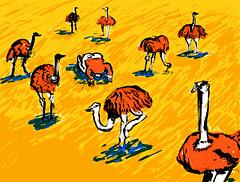 Ostrich (Chiel te Bokkel - Illustration & Comics) Tags: kenya ostrich