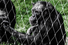 Alter Affe Angst (orlandophotografie) Tags: zoo monkey nikon tamron affe 70300 d600