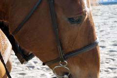 (ksparrow1216) Tags: horse equstrian sonya100 sonyalphadslra100